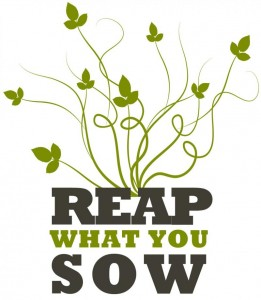 reap-what-you-sow-